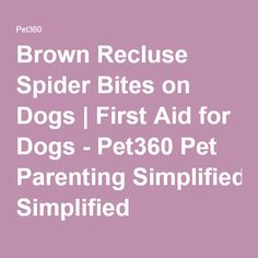 Brown Recluse Spider Bites on Dogs | First Aid for Dogs - Pet360 Pet Parenting Simplified
