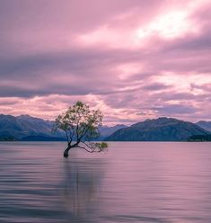 Have you ever seen That Wanaka Tree? It's one of the best things to do in New Zealand!