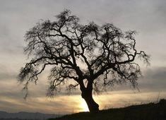 That Wonderful Tragic Mysterious Tree | Que Vida La Mia Zeichnen?