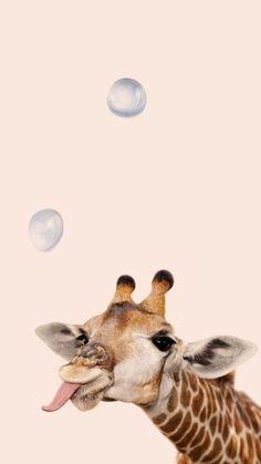 giraffe with bubble wallpaper - Luxury Cars - . - Playful giraffe with bubble wallpaper – Luxury Cars – -Playful giraffe with bubble wallpaper - Luxury Cars - . - Playful giraffe with bubble wallpaper – Luxury Cars – - Cute Wallpaper Backgrounds, Wallpaper Iphone Cute, Animal Wallpaper, Cartoon Wallpaper, Disney Wallpaper, Cute Wallpapers, Wallpaper Awesome, Iphone Backgrounds, Wallpaper Wallpapers