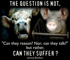 """The question is not, """"Can they reason? Nor, can they talk?""""  But rather, """"Can they suffer?"""""""