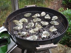 Grilled Oysters Bbq Oysters, Grilled Oysters, Beer Pairing, Oyster Recipes, Serious Eats, Best Beer, Fish And Seafood, Seafood Recipes, Grilling