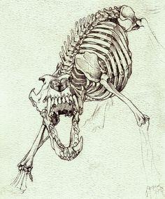 DeviantArt: More Like Wolf Skeleton Study by Dark-Wolf-X