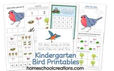 Kindergarten Bird Unit printable-use with Montessori inspired bird unit