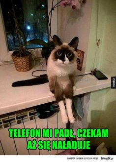 i can has Pepto? - LOLcats is the best place to find and submit funny cat memes and other silly cat materials to share with the world. We find the funny cats that make you LOL so that you don't have to. Funny Cats And Dogs, Cats And Kittens, Cute Cats, Animals And Pets, Funny Animals, Cute Animals, Cute Animal Photos, Cute Pictures, How To Cat