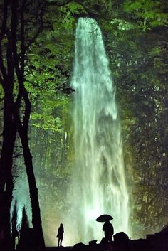 ライトアップされ幻想的に浮かび上がった玉簾の滝=山形県酒田市で