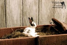 Woolytales Farm Animals