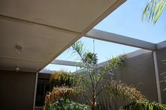 Lenore Goes to Architecture School: Case Study Apartment Phoenix, AZ