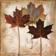 Patricia Pinto Nautral Leaves III