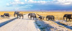 Travelers everywhere are dusting off their destination bucket lists and starting their travel planning. Whether you're wanting to experience the beauty of Kenya and Tanzania or experience the majestic gorillas in Uganda, with parts of East Africa slowly opening up post Covid-19, now is the perfect time to plan and create the ideal travel bucketlist. #exploreafrica #explorer #explorersafari #africa #travel #bucketlist #safari #eastafrica #elephants #kenya #tanzania #uganda #vacation #summer #trip Mombasa Kenya, Wildlife Safari, African Countries, African Culture, East Africa, Africa Travel, Day Tours, Rafting, Vacation Trips