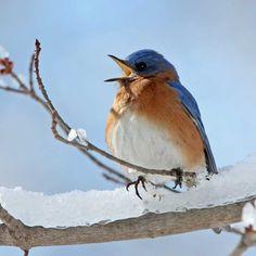 """Each bird loves to hear himself sing."" -- Arapaho Proverb"
