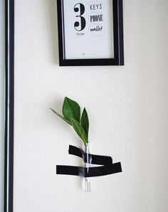 Easy way to bring some green to your walls ;)