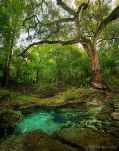 florida most beautiful towns - Google Search
