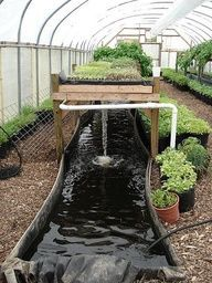 To build your own aquaponics system aquaponic garden fish garden