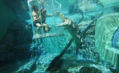 Experience the Cage of Death with Crocodiles in Australia
