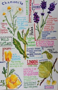 43 Ideas Plants Sketch Nature Journal For 2019 – Best Garden Plants And Planting Garden Journal, Nature Journal, Journal Entries, Journal Pages, Plant Sketches, Watercolor Journal, Watercolour, Nature Sketch, Scrapbooking