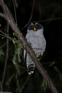 An owl in Costa Rica Rain Forest Living In Costa Rica, Beautiful Owl, Pretty Birds, Birds Of Prey, Travel Aesthetic, Bird Feathers, Beautiful Creatures, Nature Photography, Costa Rico