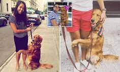 Hugging dog becomes famous for embracing strangers in New York