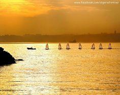La baie d'Alger
