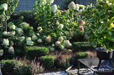 Lawendowy zawrót głowy - strona 1340 - Forum ogrodnicze - Ogrodowisko
