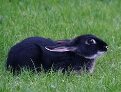 One need only sit still and breathe for bunniness to emerge from the heart. RT BunnyBuddhism