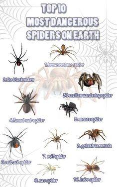 // Survival Life Hacks, Survival Food, Camping Survival, Survival Tips, Survival Skills, Diy Camping, Spider Identification Chart, Spider Bites, Dangerous Animals