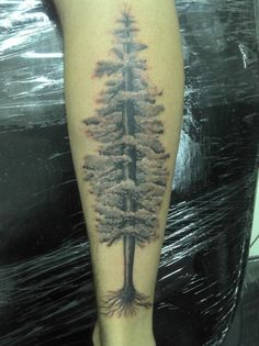 """""""This is my first tattoo!  I always want to tattoo a tree in my leg, but I never found any kind of tree I like.   So, browsing here in FYTattoos, I've found a kind of Sequoia, a very, very tall tree, and it's inspired me to do this one!  I LOVE IT!"""""""
