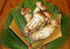 """Wild grown Chinese matsutake mushroom from Changbai Mountain area. Matsutake literally means """"pine mushroom."""" Revered throughout Asia, this traditional delicacy is a favorite of Japanese chefs, whose preparations are well-suited to its strong, spicy-clean fragrance and taste."""