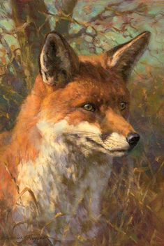 Giclee print of a fox by Frederick Haycock Wildlife Paintings, Wildlife Art, Animal Paintings, Fox Painting, Texture Painting, Fox Pictures, Pictures To Paint, Landscape Art, Landscape Paintings