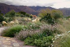 Gaura and grasses. Meadow Garden, Dry Garden, Spring Garden, Garden Landscape Design, Garden Landscaping, Beautiful Landscapes, Beautiful Gardens, Gaura, Australian Garden