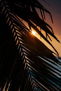 Sunset through a palm tree in Tamarindo, Costa Rica. Photographed by Kristen M. Brown, Samba to the Sea at The Sunset Shop.