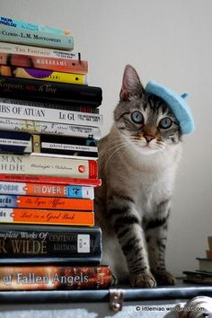 A pile of books and a cat to cuddle :) Oh wait... my cat needs a hat...:
