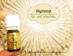 Hyssop Essential Oil / Beyond the Basics of Essential Oils / yleo / Healing Oils of the Bible / young living http://www.rebeccaatthewell.org