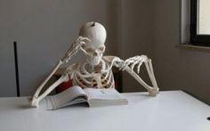 Mucche universitarie: Lo studio! #studio #università #divertenti