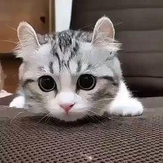 Look at you – Cool Cat Tree House – Ingrid Lurz - Baby Animals Cute Funny Animals, Cute Baby Animals, Animals And Pets, Cute Dogs, Funny Cats, Fluffy Animals, Animals Images, Cute Kittens, Baby Kittens