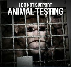 No to animal testing