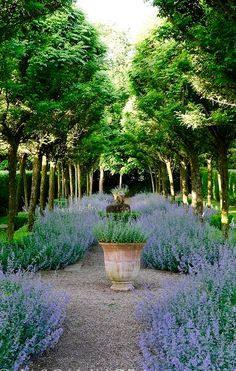 Image result for lavender Gertrude Jekyll - Cothay Manor.