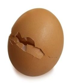 Chickens make very cute pets. Hatching chicken eggs can be a very interesting science project for your children, or an interesting summer activity. Hatching Chickens, Baby Chickens, Farm Animals, Cute Animals, Macbeth Themes, Strange Events, Most Favorite, Favorite Things, Chicken Eggs
