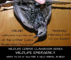 Wildlife Center Classroom Series | WILDLIFE EMERGENCY: what to do when you find a wild animal in need | February 11, 2015 ONLINE