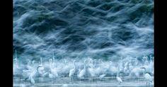 Concurso da National Geographic premiou algumas das melhores fotos feitas no ano de 2013. Outra imagem de natureza que recebeu menção honrosa foi a de Réka Zsirmon, feita no rio Danúbio, na Hungria
