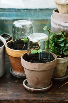 Container gardening is a fun way to add to the visual attraction of your home. You can use the terrific suggestions given here to start improving your garden or begin a new one today. Your garden is certain to bring you great satisfac Succulent Terrarium, Planting Succulents, Garden Plants, Indoor Plants, Planting Flowers, Indoor Cactus, Cactus Cactus, Vegetable Planters, Container Gardening Vegetables