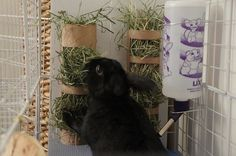 I really need a solution for getting the hay off my the floor of my bunny rabbits cage, I had a hay holder (plastic) but he refused to eat from it. Since he likes chewing on cardboard I think this might just work!
