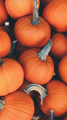 Pumpkin, Thanksgiving, Vegetable, Natural Foods Wallpaper for Android [Full HD], Food and Drink Background and Image