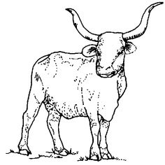 1000 images about texas state symbols unit study on for Longhorn coloring page