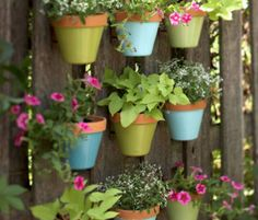 Hang Picture Frame to Decorate Backyard Fence Decoration Makeover DIY Ideas DIYHowto Shade Loving Flowers, Canna Flower, Backyard Fences, Backyard Ideas, Garden Ideas, Garden Tips, Garden Art, Hanging Flower Pots, Ground Cover Plants