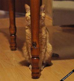 Caché! Je suis le meilleur a cache-cache!!