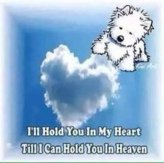 Rip sweet Zoe and Barbi 🦋❤️🐾 Buffy, Happy Sunday, Heaven Poems, Heaven Quotes, Pet Loss Grief, Pet Remembrance, Dog Heaven, White Terrier, Dog Memorial