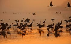 Не всегда наше утро бывает таким. Иногда хочется проснуться в другом месте и в другое время, но как обычно, какие то обстоятельства или простая собственная лень мешают исполнению задуманного. П. с. Делаю выводы по дороге на работу. #travelphoto #israel #morning #birds #sunrise #israeltrip #фотошколавизраиле #фототуры