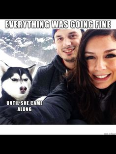 That dog does NOT look happy!