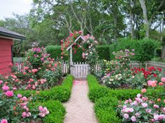 rose english cottage | The entrance to Podge's Hamptons cottage is a riotous mass of roses ...